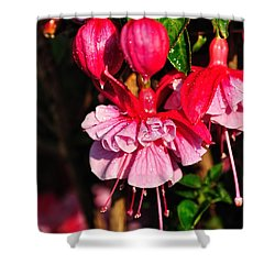 Fuchsias With Droplets Shower Curtain