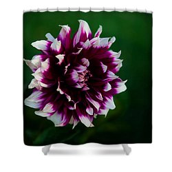Shower Curtain featuring the photograph Fuffled Petals by Cherie Duran