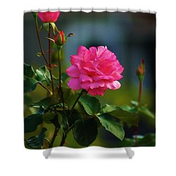 Shower Curtain featuring the photograph Full Blown by Craig Wood