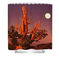 Full Moon Behind Ancient Bristlecone Pine White Mountains California Shower Curtain by Dave Welling