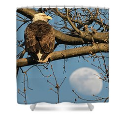 Full Moon Eagle  Shower Curtain