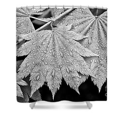 Full Moon Maple Leaf After A Spring Rain Shower Curtain