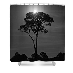 Full Moon Pearl  On Old Longleaf Pine Setting Shower Curtain
