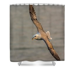 Fulmar In Flight Shower Curtain
