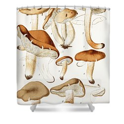 Fungi Shower Curtain by Jean-Baptiste Barla