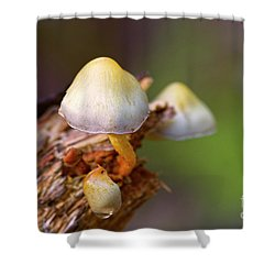 Shower Curtain featuring the photograph Fungi On A Stump by Sharon Talson