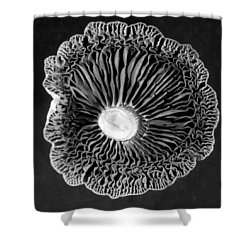Fungi Two Shower Curtain by Jim Occi