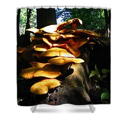Shower Curtain featuring the photograph Fungus Colony 23 by Maciek Froncisz