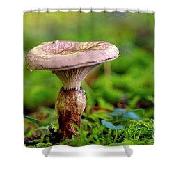 Shower Curtain featuring the photograph Fungus  by Sharon Talson