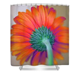 Funky Gerbera Shower Curtain by Amanda Barcon