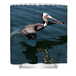 Shower Curtain featuring the photograph Funky Wings by Rod Wiens