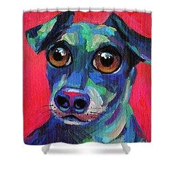 Funny Dachshund Weiner Dog With Intense Eyes Shower Curtain by Svetlana Novikova