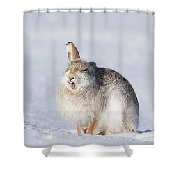 Funny Face - Mountain Hare - Scottish Highlands  #13 Shower Curtain