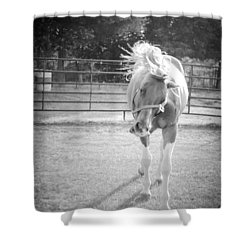 Shower Curtain featuring the photograph Funny Horse In Black And White by Kelly Hazel