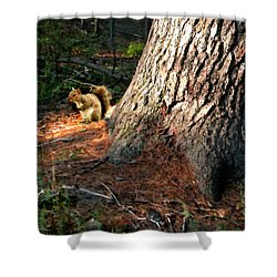 Furry Neighbor Shower Curtain by Paul Sachtleben