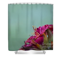 Shower Curtain featuring the photograph Fuchsia In Bloom by Andrea Silies