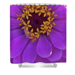 Fuschia Zinnia Shower Curtain