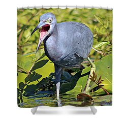 Fussy Little Blue Heron Shower Curtain