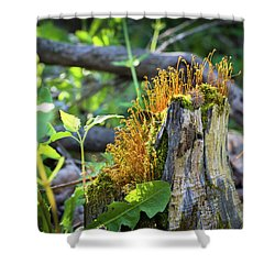 Shower Curtain featuring the photograph Fuzzy Stump by Bill Pevlor