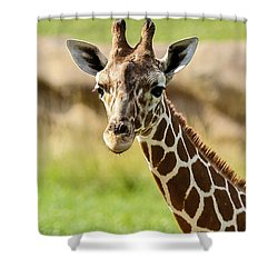 G Is For Giraffe Shower Curtain by John Haldane