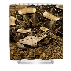 Gaboon Viper Resting 2 Shower Curtain