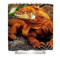 Galapagos Iguana Shower Curtain by Rod Jellison