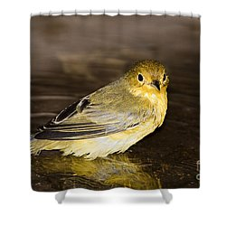 Galapagos Mangrove Warbler Shower Curtain by Dave Fleetham - Printscapes