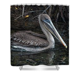 Galapagos Pelican Shower Curtain