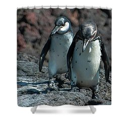 Galapagos Penguins  Bartelome Island Galapagos Islands Shower Curtain