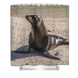 Galapagos Sea Lion Shower Curtain