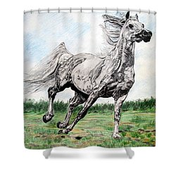 Galloping Arab Horse Shower Curtain by Melita Safran