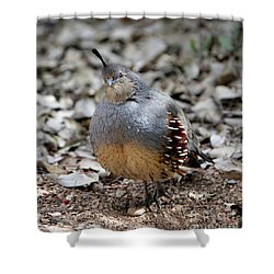 Gambel's Quail Shower Curtain