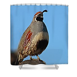 Gambel's Quail On Sunny Perch Shower Curtain