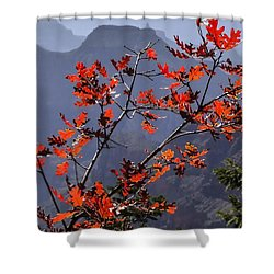 Gamble Oak In Crimson Fall Splendor Shower Curtain
