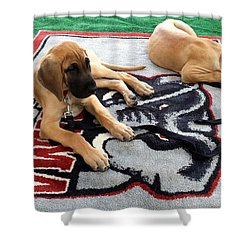Gameday Great Dane Puppies Shower Curtain