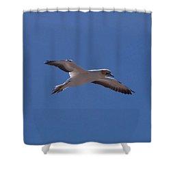 Gannet #1 Shower Curtain
