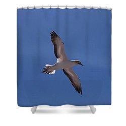 Gannet #2 Shower Curtain