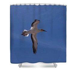 Gannet #3 Shower Curtain