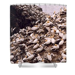 Gannet Cliffs Shower Curtain by Mary Mikawoz