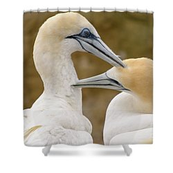 Shower Curtain featuring the photograph Gannet Pair 1 by Werner Padarin