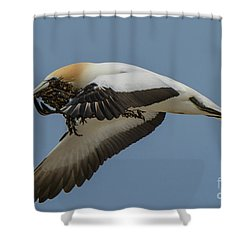 Shower Curtain featuring the photograph Gannets 1 by Werner Padarin