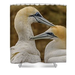 Gannets 4 Shower Curtain