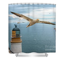 Gannets At Bass Rock Lighthouse Shower Curtain