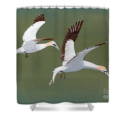 Gannets - Painting Shower Curtain by Veronica Rickard