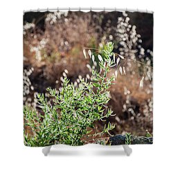 Garden Contre Jour 2 Shower Curtain