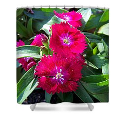 Shower Curtain featuring the photograph Garden Delight by Sandi OReilly