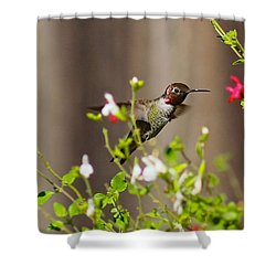 Garden Hummingbird Shower Curtain