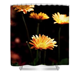 Shower Curtain featuring the photograph Garden Light by Eric Christopher Jackson