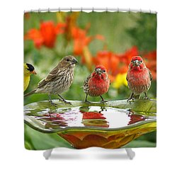 Garden Party Shower Curtain by Bill Pevlor