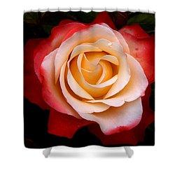 Shower Curtain featuring the photograph Garden Rose by Luc Van de Steeg